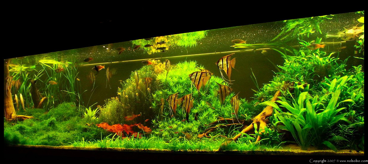fish tank movie 70 litre tropical fish tank 60 litre cycle 2nd update youtube 2017 fish tank. Black Bedroom Furniture Sets. Home Design Ideas